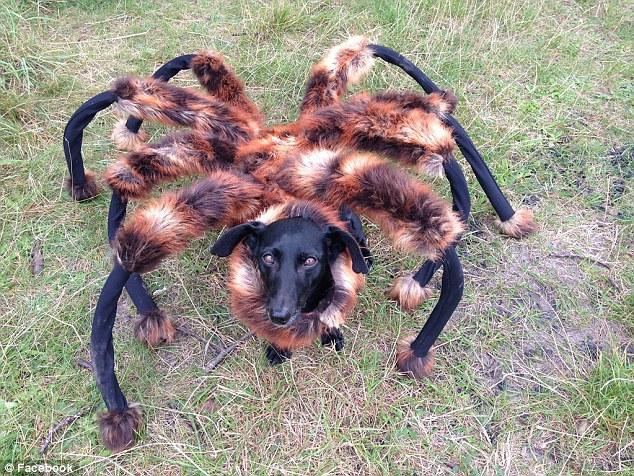 spider dog2